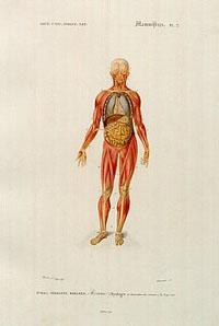 Ткани. Типы тканей и их свойства