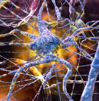 Нейрофармакологическая терапия