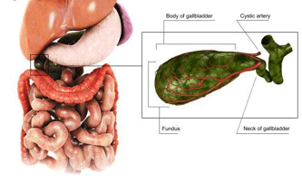 Желчно-каменная болезнь