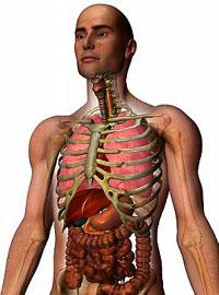 Органы равновесия, мышечного и кожного чувства, обоняния и вкуса