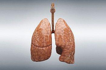 Дыхательные движения и их регуляция