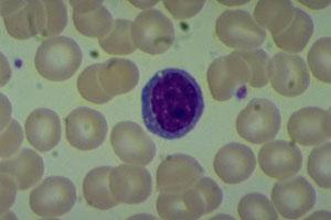Движение крови и лимфы в организме
