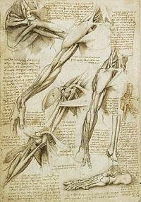 Вегетативная (автономная) нервная система