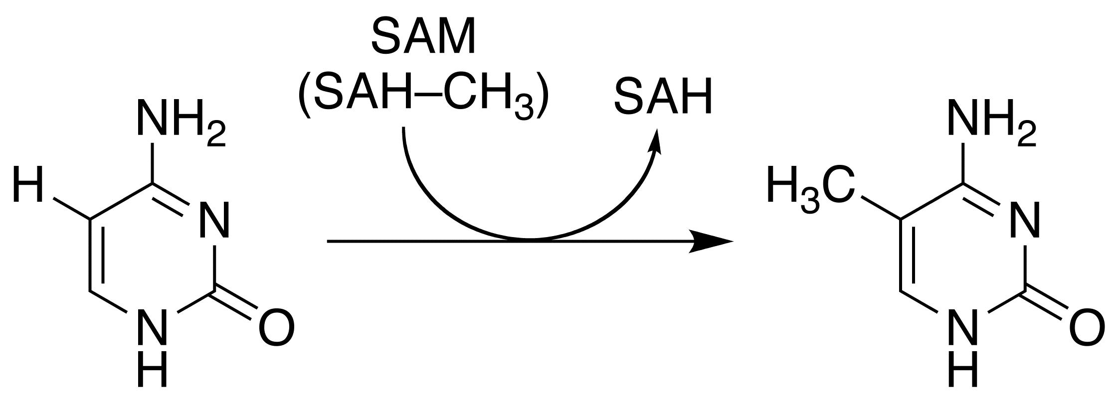5-Метилцитозин