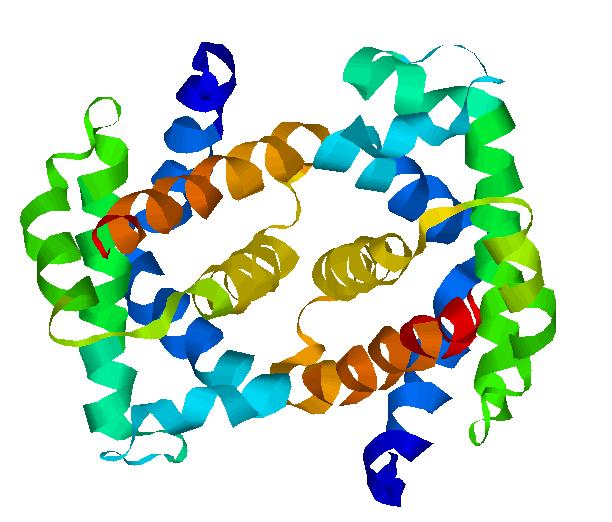 Гемоглобин F