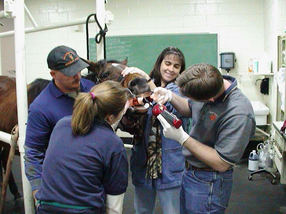 Врач ветеринарной медицины
