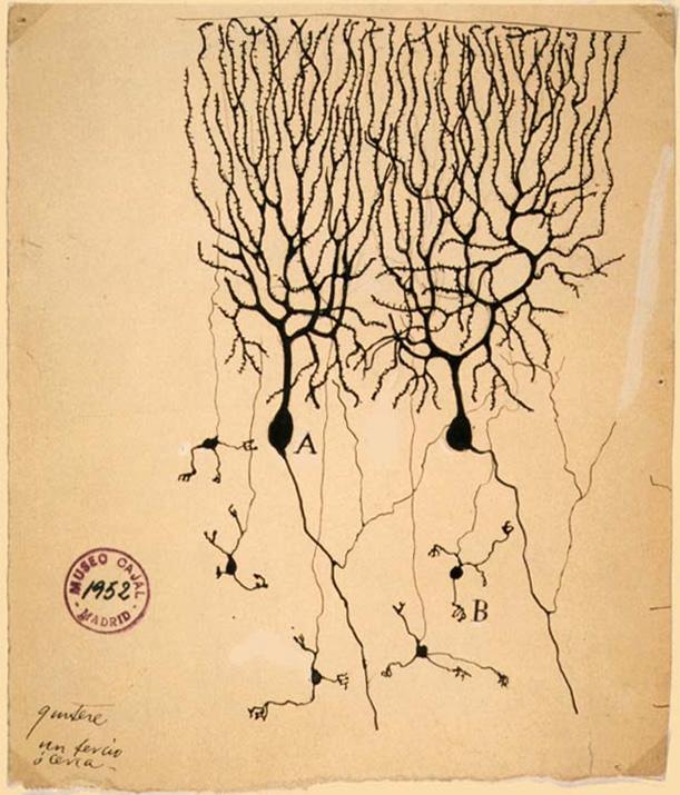 Гранулярные клетки