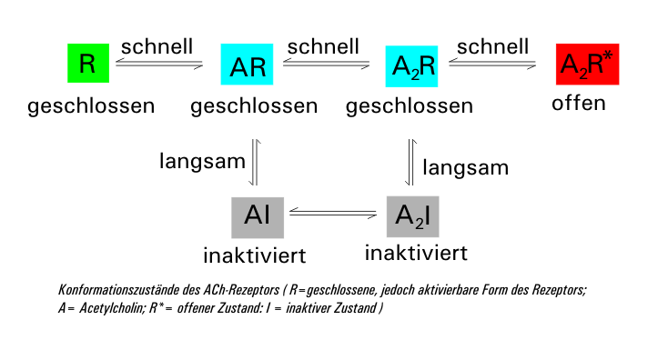 Никотиновый ацетилхолиновых рецепторов