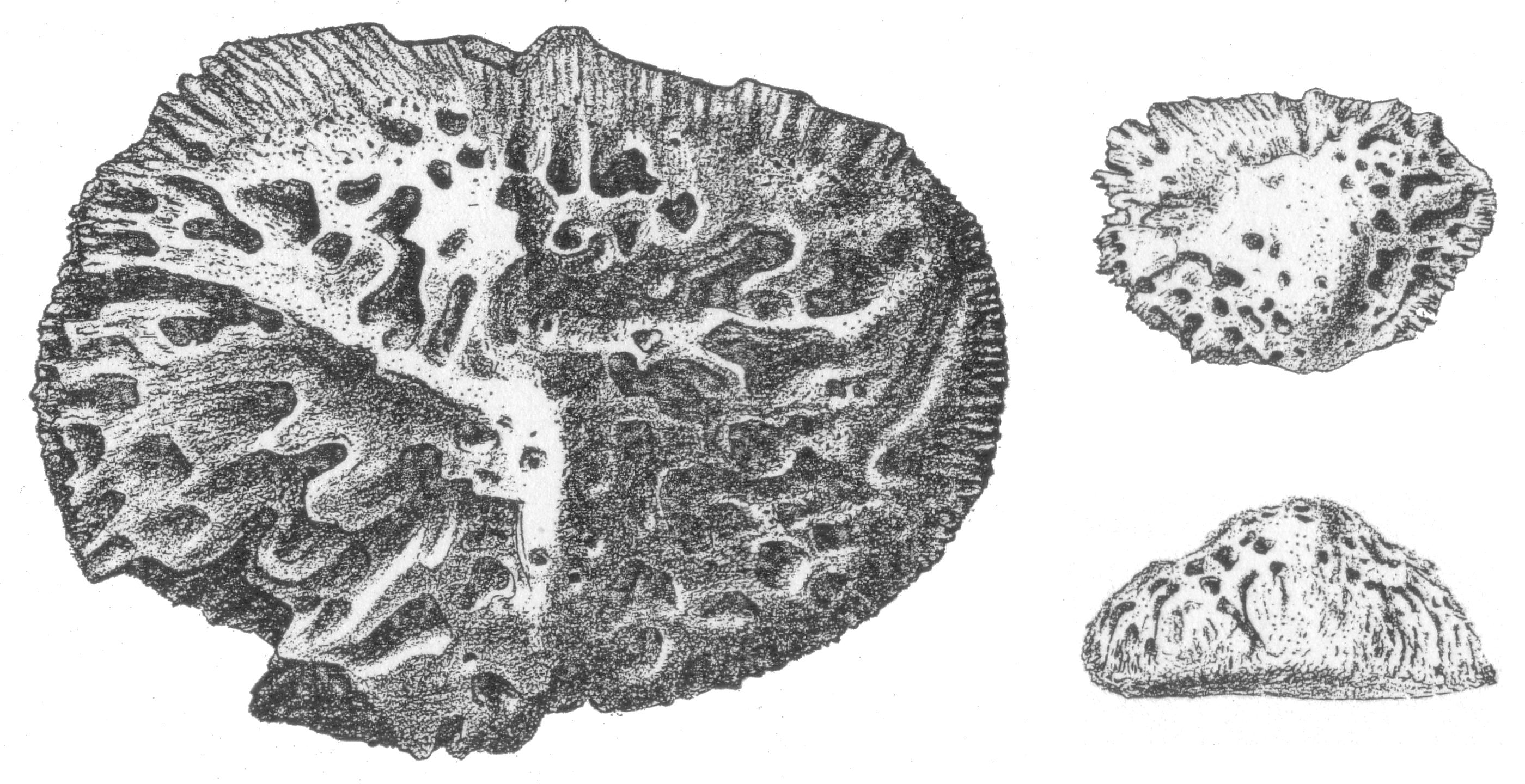 Остеодермы