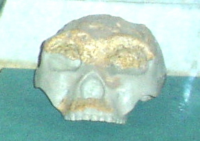 Homo erectus lantianensis