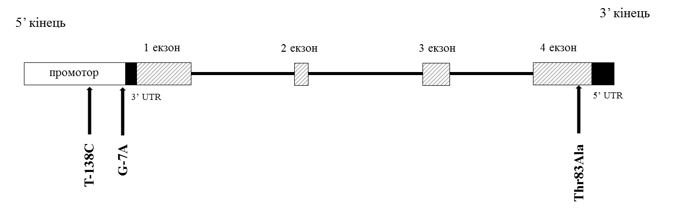 Матриксный Gla-протеин