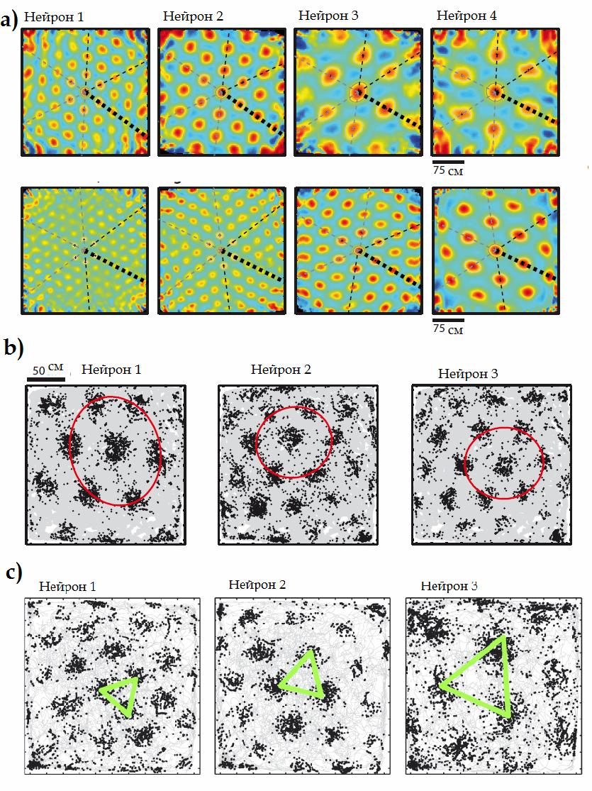 Grid нейрон