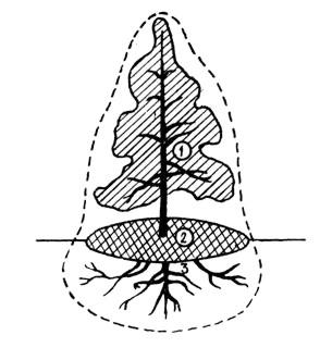 Едасфера