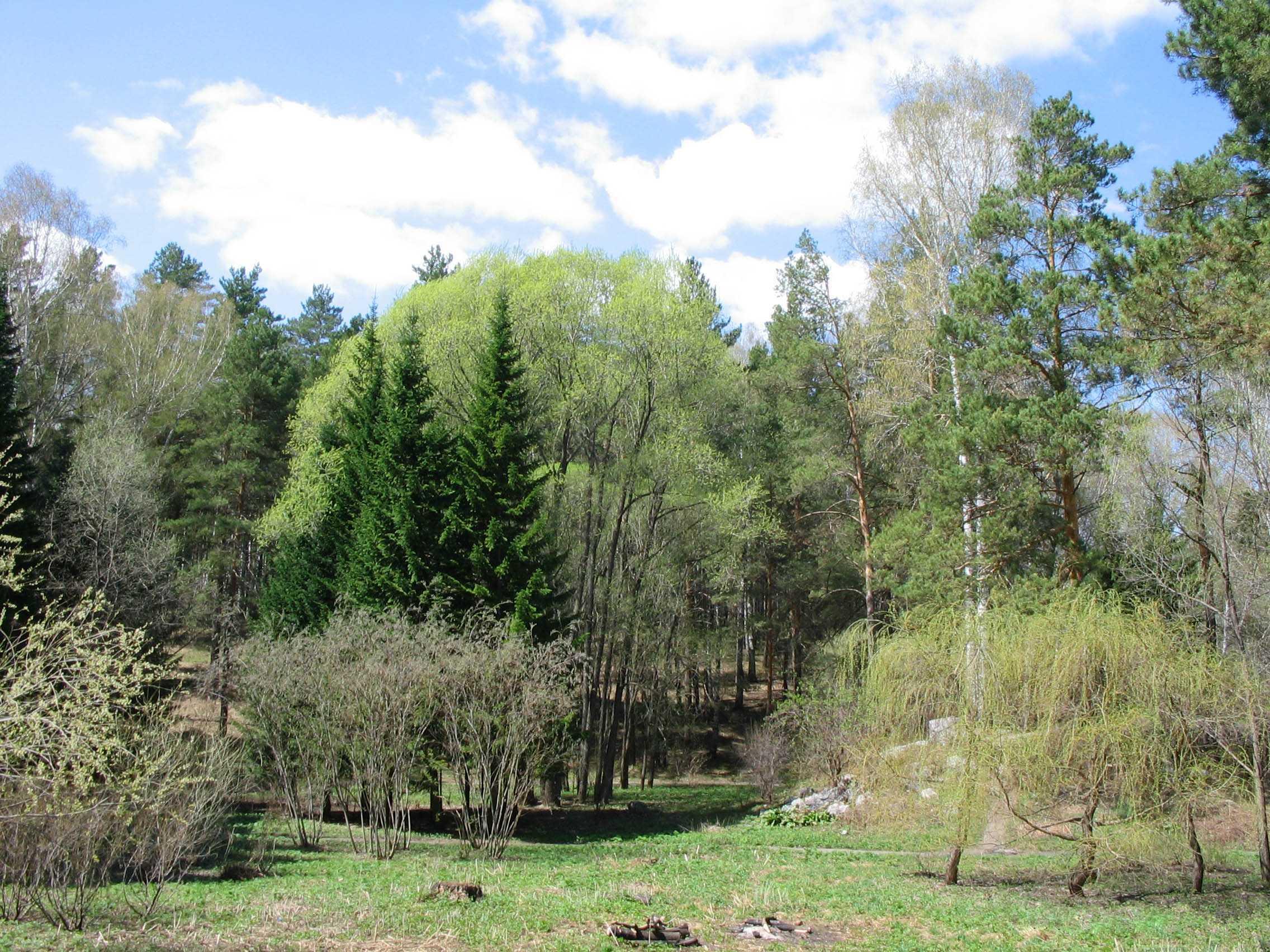 Центральный сибирский ботанический сад (Новосибирск)