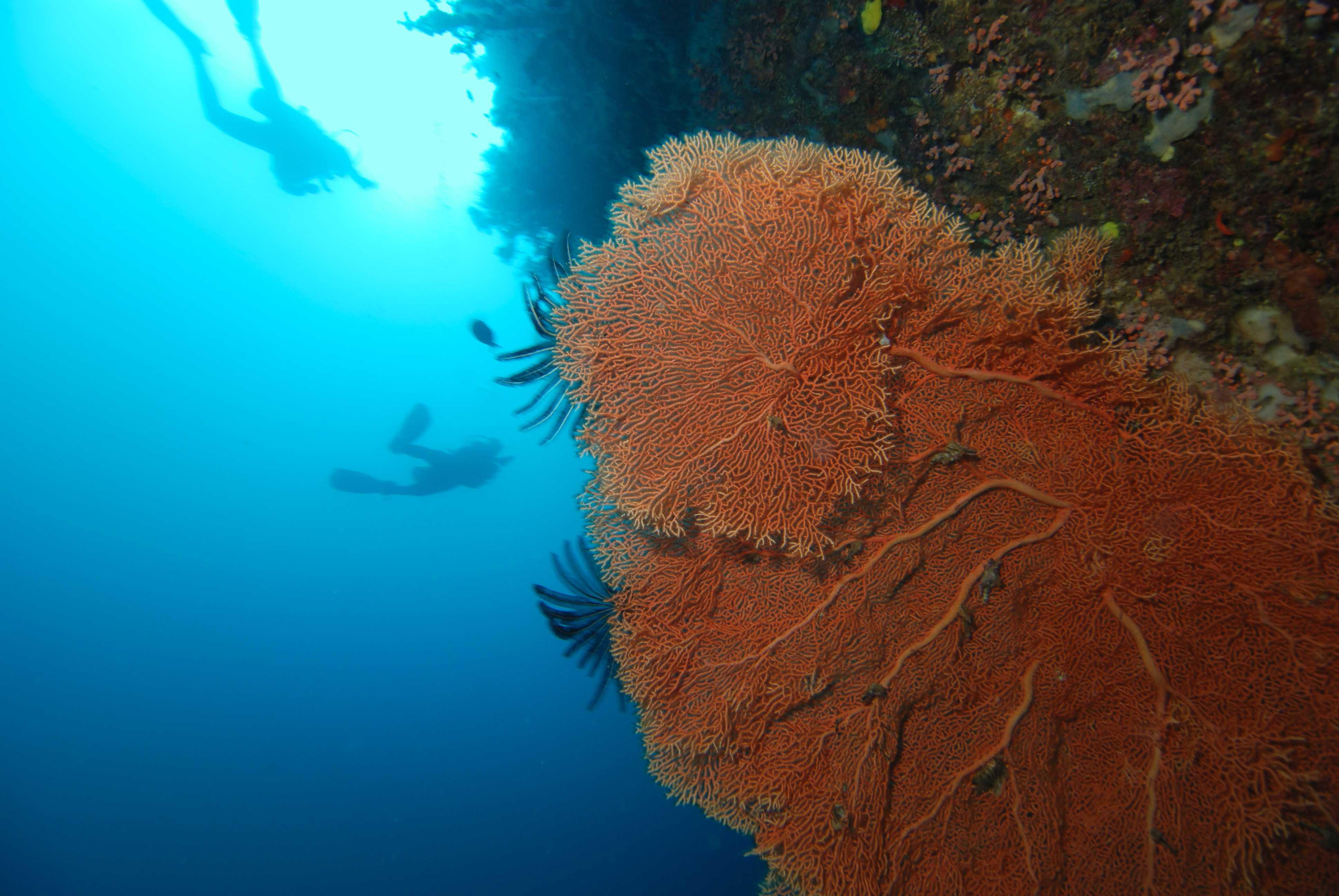 Восьмиконечные кораллы
