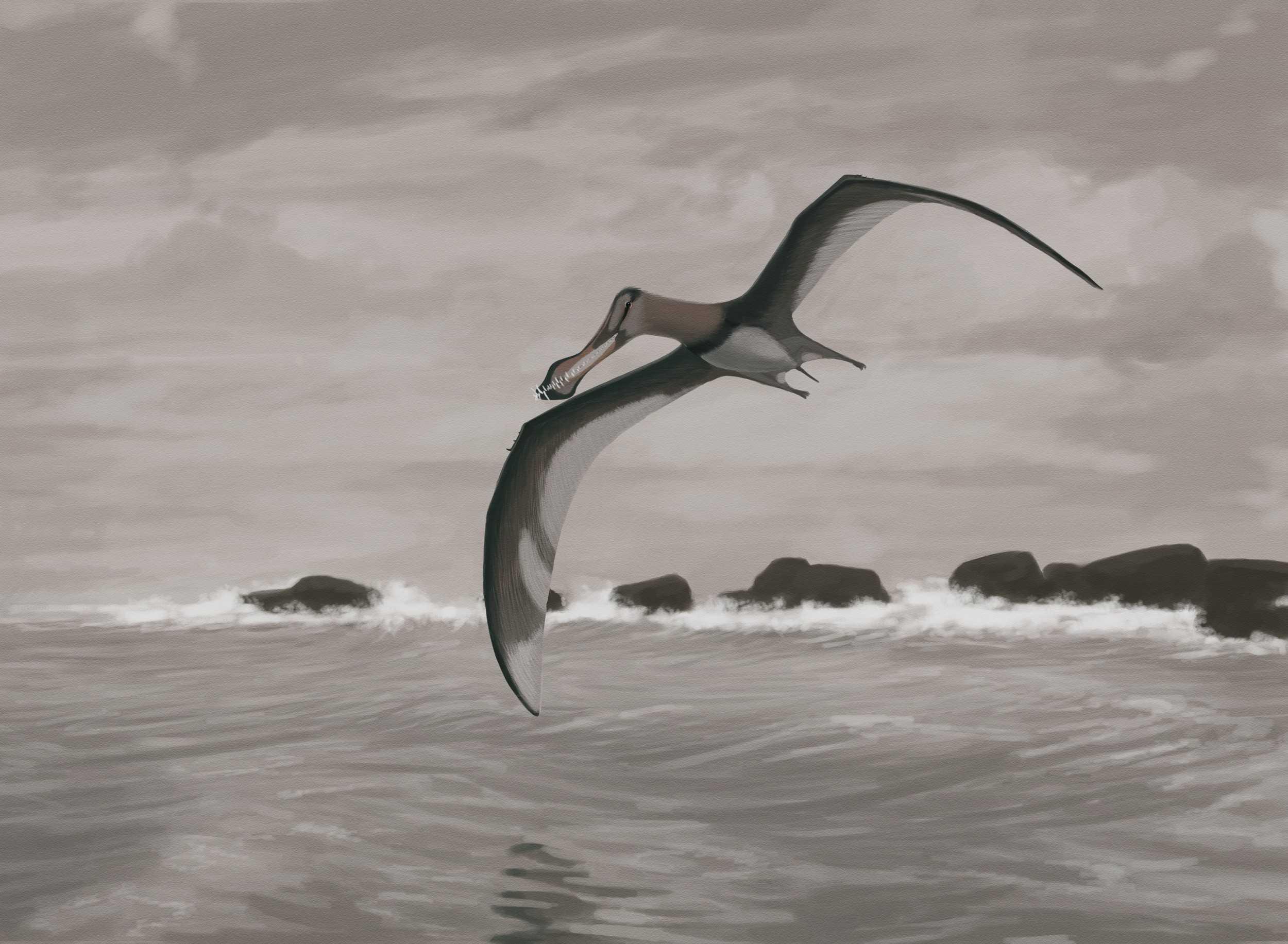 Летающие животные