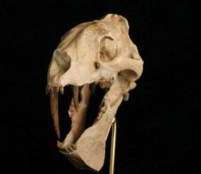 Эоцен олигоценового вымирания