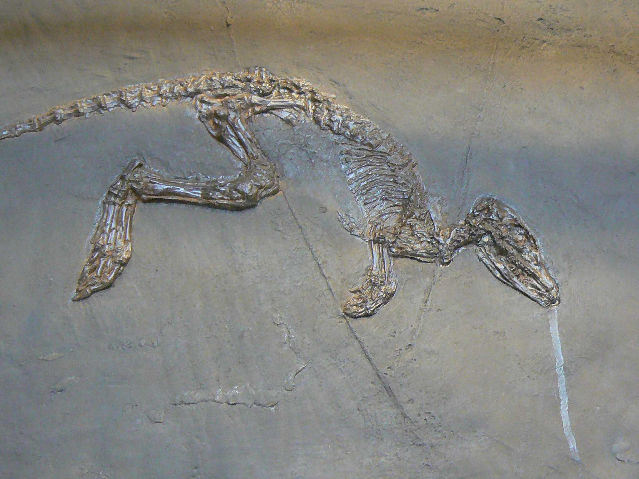 Эоцен-олигоценового вымирания