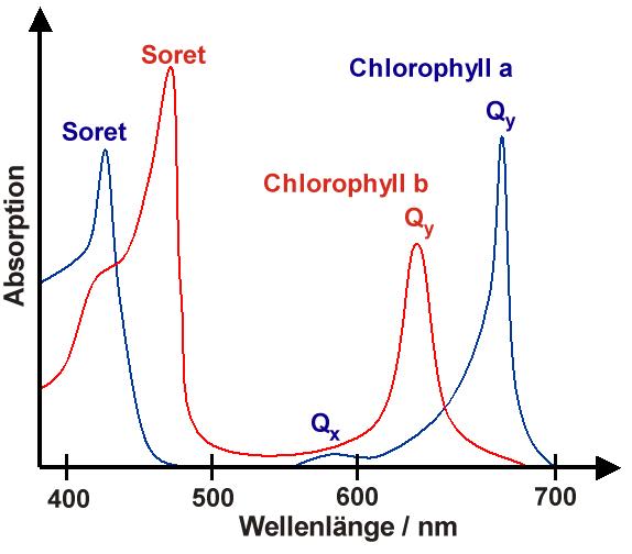 Бактериохлорофилл