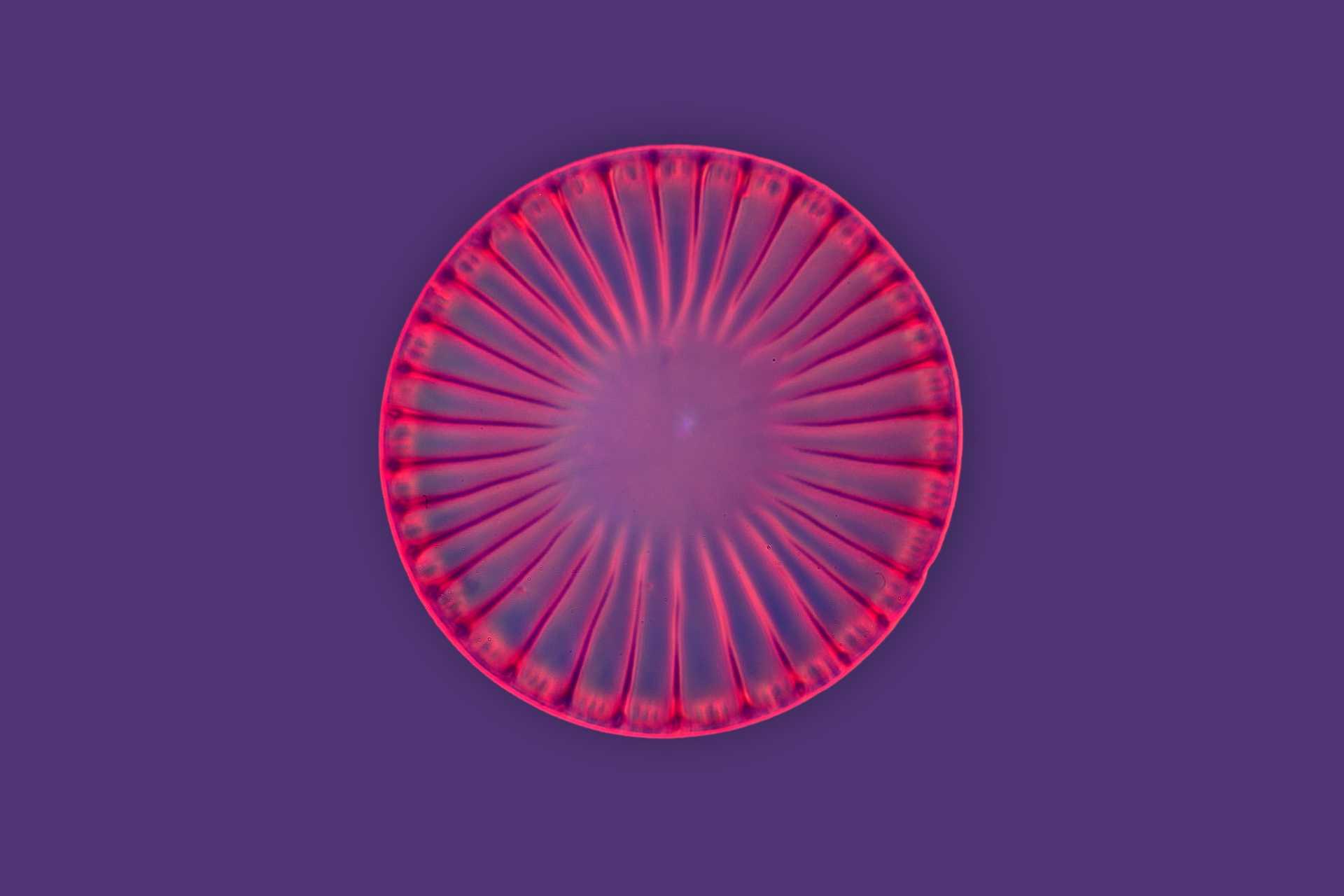 Темнопольная микроскопия