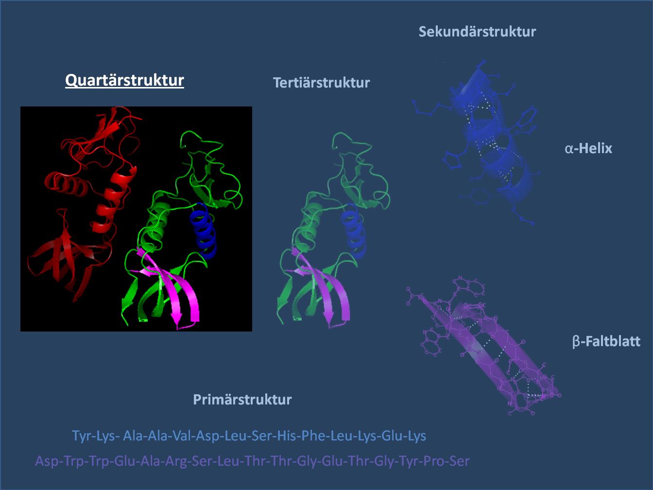 Четвертичная структура белков
