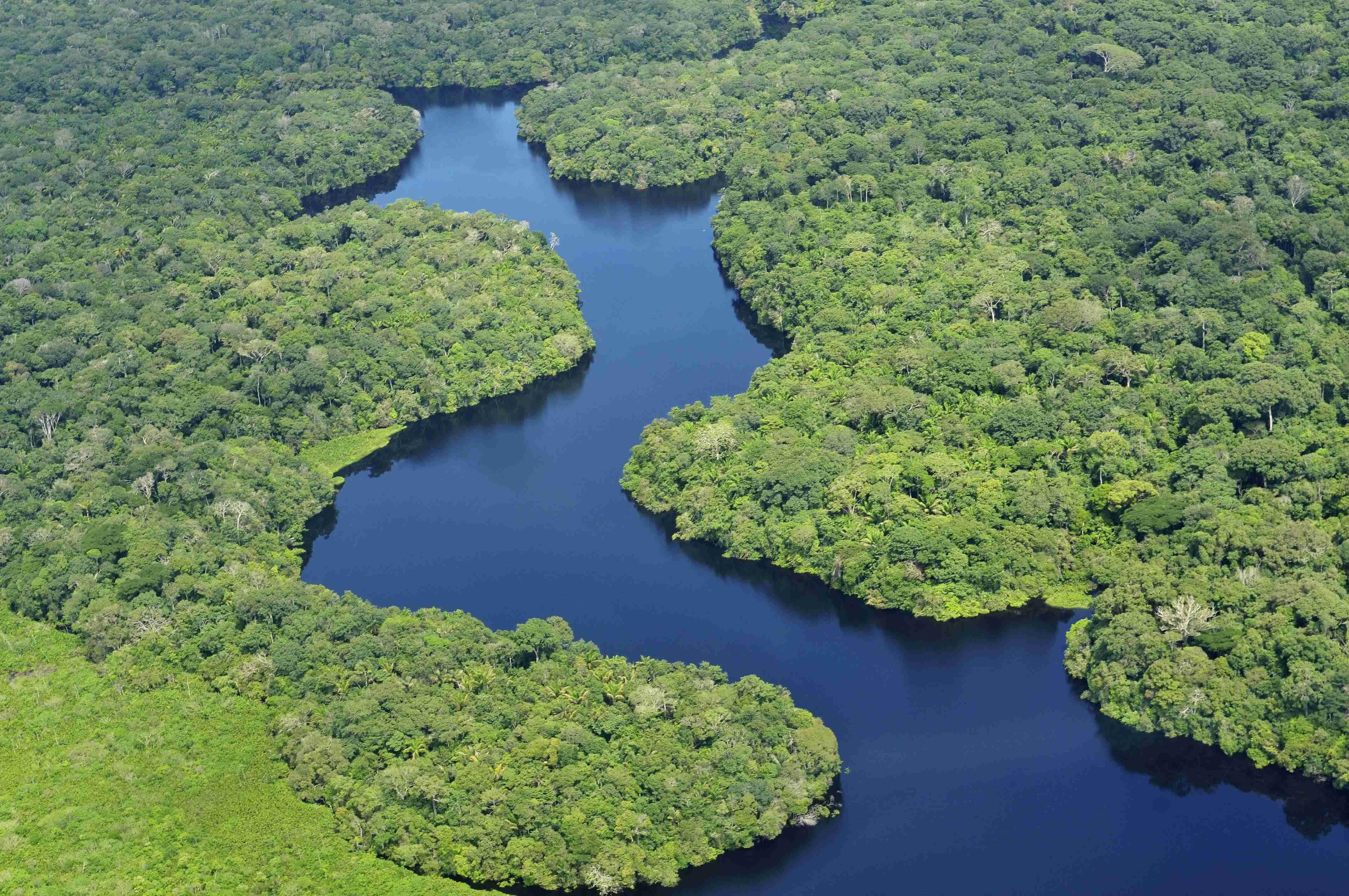 L Amazonie, le poumon de la plante face la dforestation Photo de l amazonie