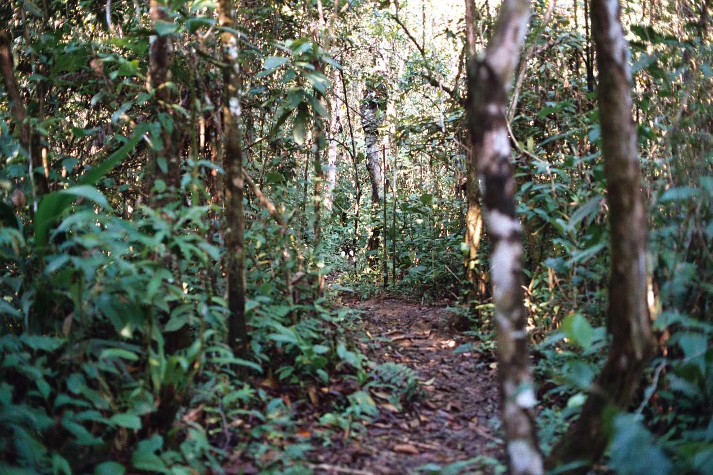 Биомы суши вечнозелёные тропические леса рельеф
