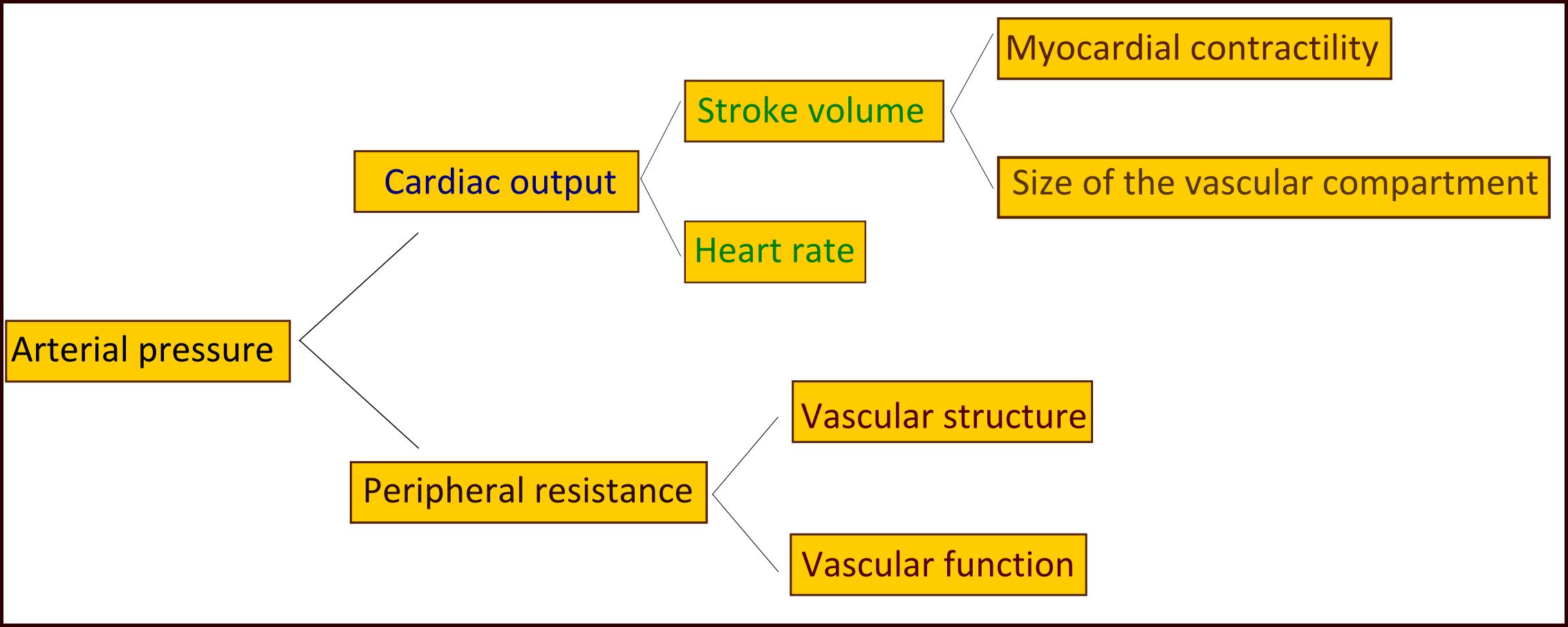 Патофизиология гипертензии