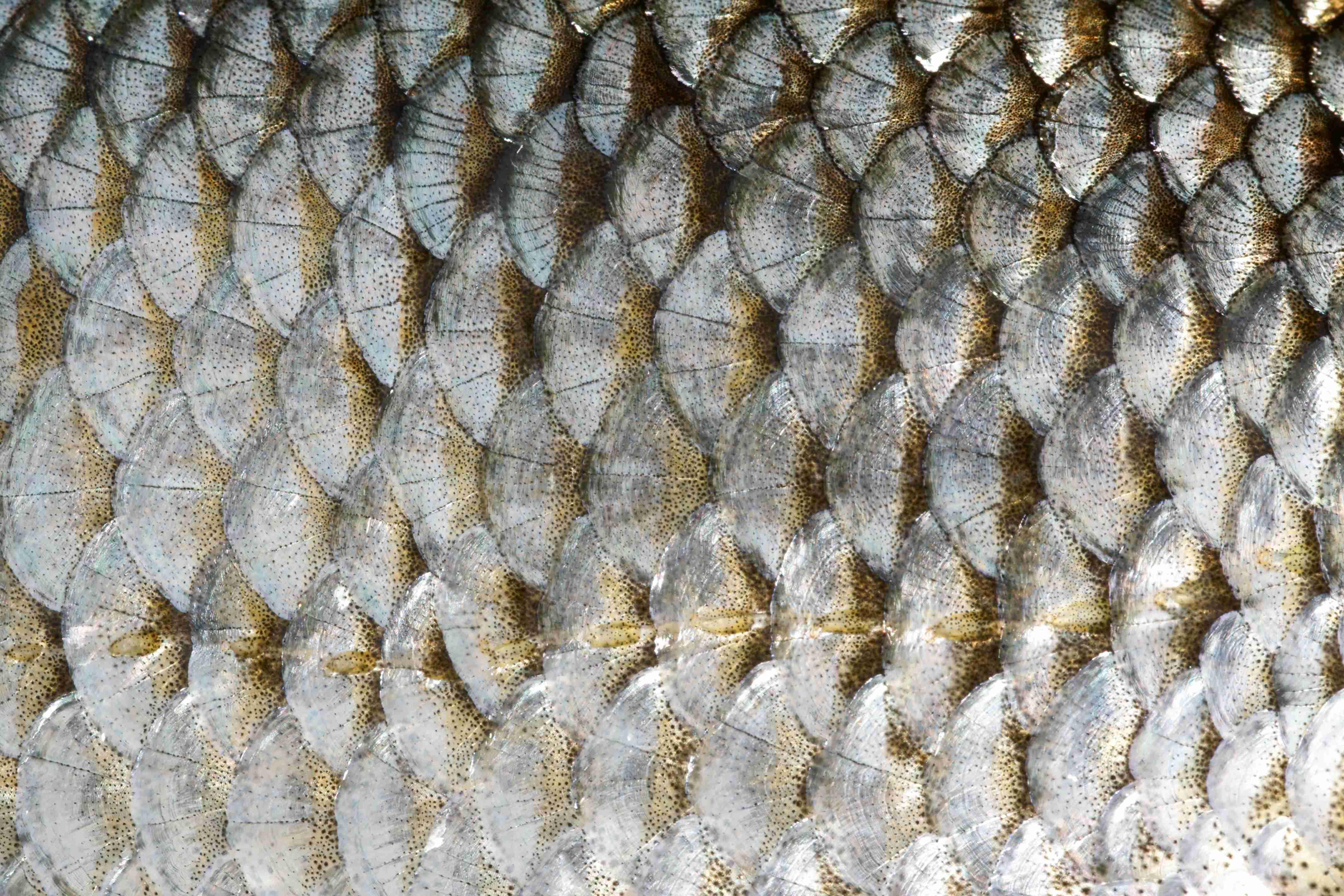 кожа рыб картинки свои достижения этом