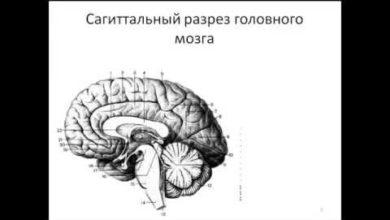 Photo of Черепные нервы