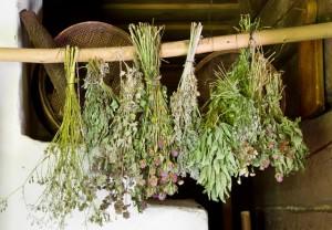 Photo of Какие травы полезны в бане?