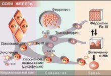 Photo of Чем отличается ферритин от железа?