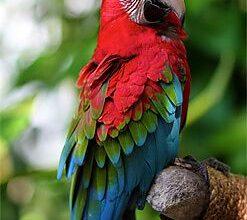 Photo of Самые красивые попугаи в мире