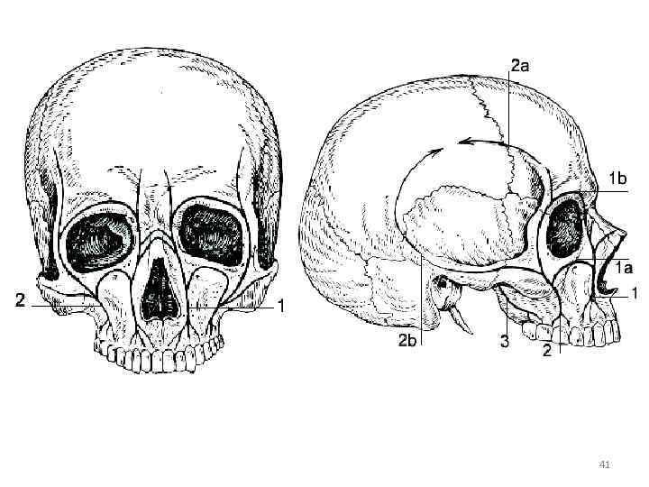 Photo of Анатомия: Топография черепа