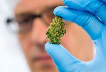 Photo of Заказ нарколога на дом при передозировке марихуаной