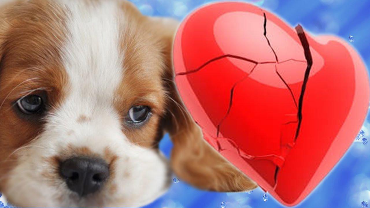Photo of Сердечная недостаточность у собак