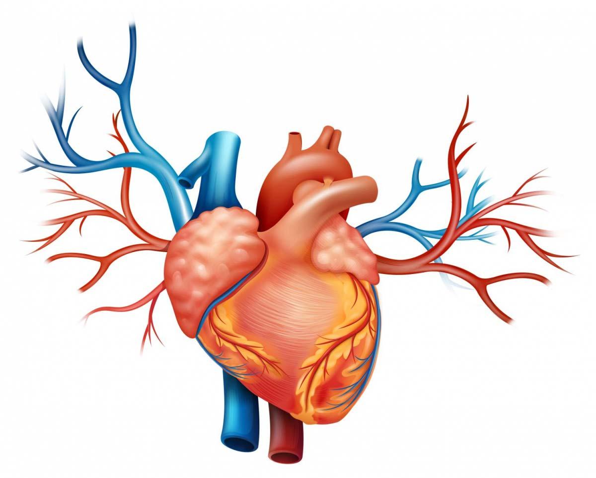 Photo of Хроническая сердечная недостаточность