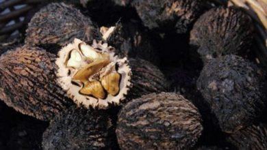 Photo of Состав и свойства чёрного ореха