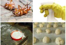 Photo of Борная кислота от тараканов: популярное средство борьбы с паразитами