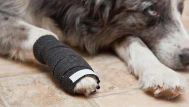 Photo of Травмы у собак и первая помощь